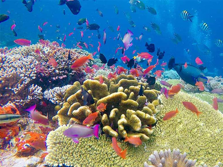 Colourful Coral Reef and fish at Siaba Besar
