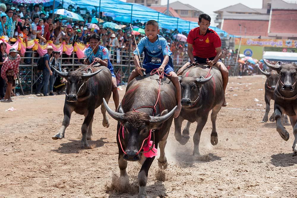 Buffalo 31 - HOLY COW: A Day at Chuhonburi Buffalo Races