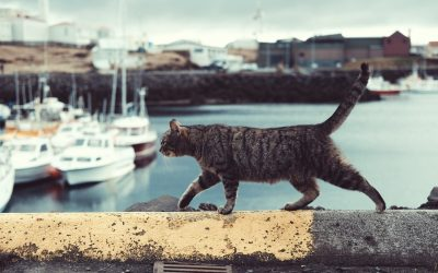 Cat lady world tour