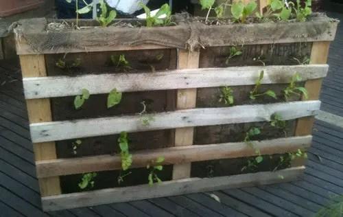 How Build Vertical Garden Wall