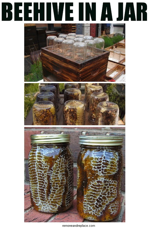 https://i0.wp.com/removeandreplace.com/wp-content/uploads/2013/05/beehive-in-a-jar.jpg