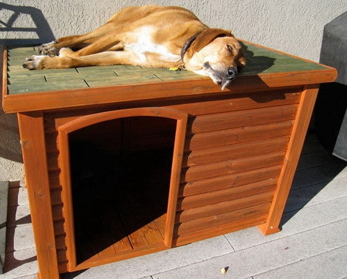 Creative Dog House Design Ideas 31 Pictures RemoveandReplace Com