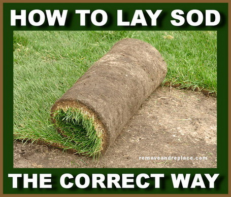Easiest Way To Prepare Lay and Plant Sod In Your Yard