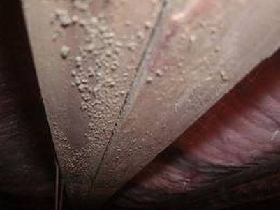 Remove Mold Mildew Smell  Home