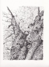 Tree Pen Drawing 3