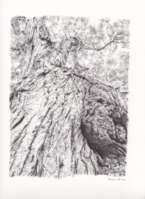 Tree Pen Drawing 2