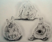 Bunny Triangle