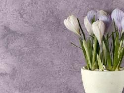 carpet wallpaper selection