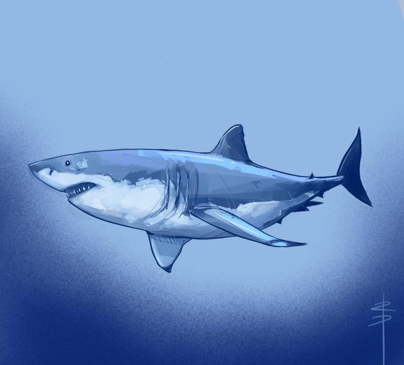 procreate-shark