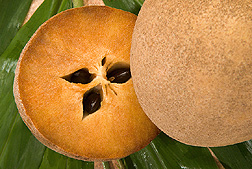Sapodilla Mexican Fruit