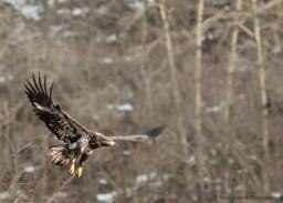 3 2 1 Eagle
