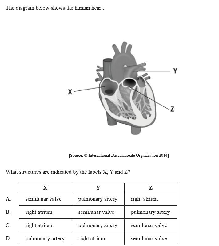 Ib biology human physiology professora renata quartieri ib 2013nov hl 1c ccuart Image collections