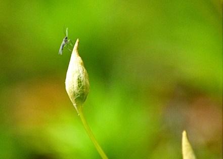 Frühling im Wald (1)