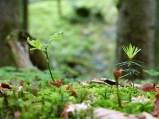 Frühling im Wald (10)