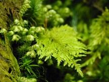 Frühling im Wald (5)