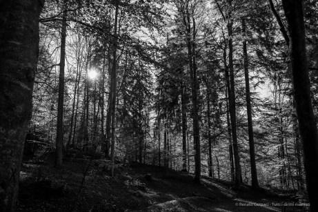 Neuschwanstein, Baviera novembre 2014. Nikon D810, 27mm (24.0-70.0mm ƒ/2.8) 1/160sec ƒ/3.2 ISO 64