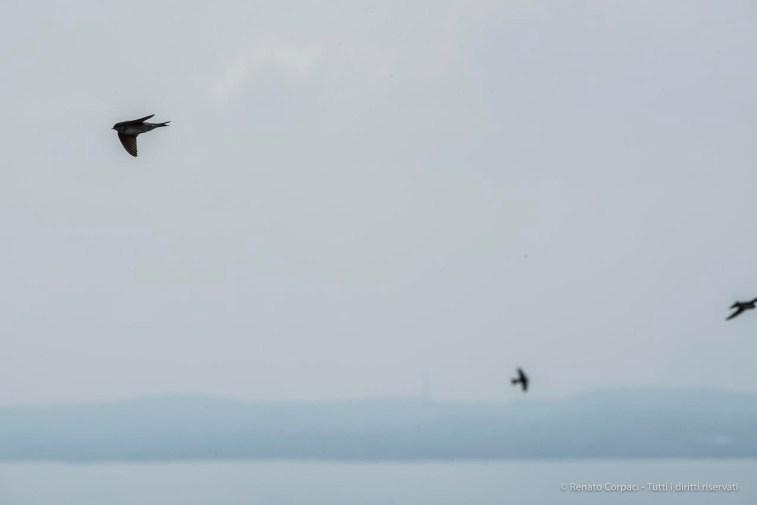Air show. Manerba, Lake Garda 2016. Nikon D750, 400 mm (80-400.0 mm ƒ/4.5-5.6) 1/1600 ƒ/18 ISO 1000