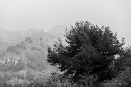 «Until /Great Birnam Wood to high Dunsinane Hill /Shall come...». Near Maro, Andalucia, Nikon D810, 240mm (80-400.0mm ƒ/4.5-5.6) 1/200 ƒ9 ISO64