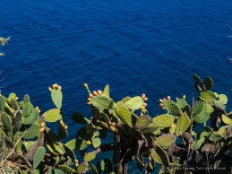 Fichi d'India a Milazzo. 25 agosto 2014 - Canon PawerShot G1 X, 37mm, 1/160 ƒ/11 ISO 100
