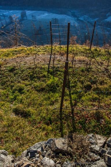 "A vineyard near Teglio, Valtellina. Nikon D810, 24 mm (24,0 mm ƒ/1.4) 1/160"" ƒ/9 ISO100"