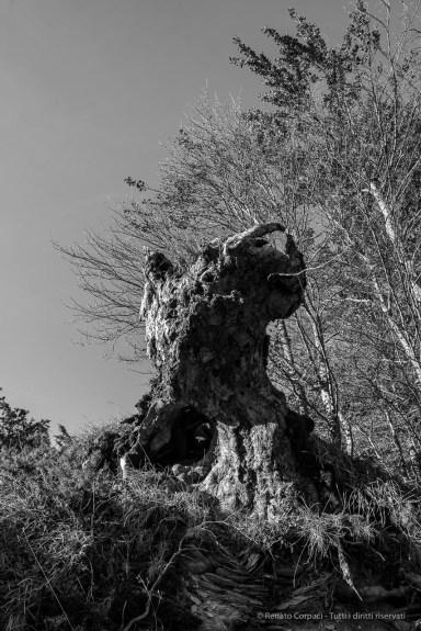 """Foreste Casentinesi. Nikon D810, 24 mm (24.0 mm ƒ/1.4) 1/125"""" ƒ/8 ISO 64"""