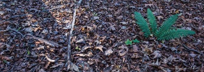 """Foreste Casentinesi. Nikon D810, 24 mm (24.0 mm ƒ/1.4) 1/125"""" ƒ/8 ISO 1250"""