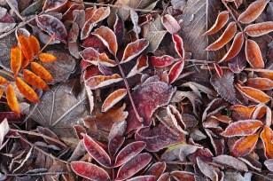 nature-patterns-005