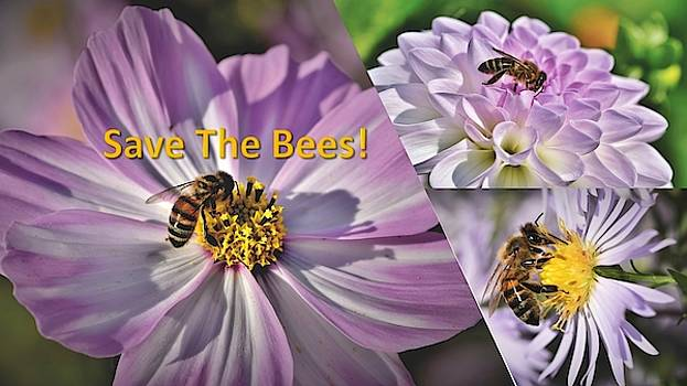 Nancy's Novelty Photos on Pixels Products for You: Save the Bees Lavender flowers