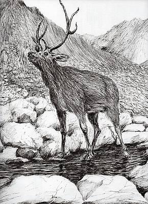 Deer Drinking Water Drawing : drinking, water, drawing, Drinking, Water, Pixels