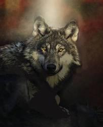 Mystical Wolf Art Fine Art America