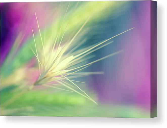 bright weed canvas print