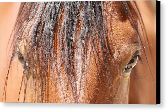Mustang Macro Canvas Print featuring the photograph Mustang Macro by Maria Jansson