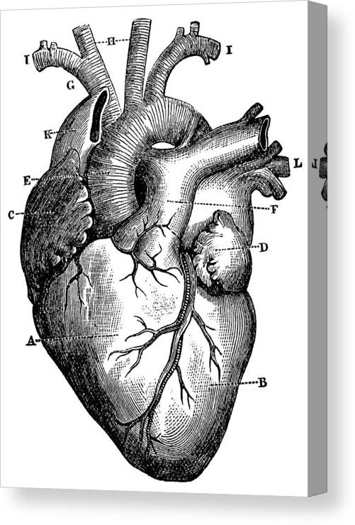 Detailed Heart Drawing : detailed, heart, drawing, Heart, Drawing, Detailed