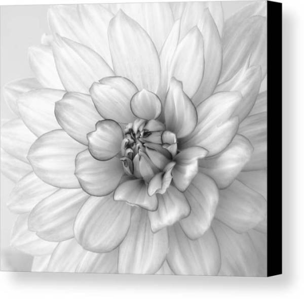 Dahlia Flower Black And White Canvas Print Canvas Art by