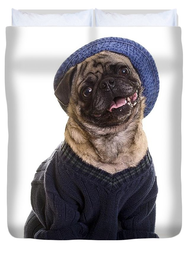 Sweater For Pug : sweater, Sweater, Duvet, Cover, Edward, Fielding