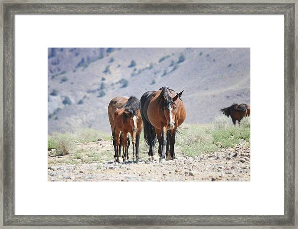 Beautiful Mustang Family Framed Print featuring the photograph Beautiful Mustang Family by Maria Jansson