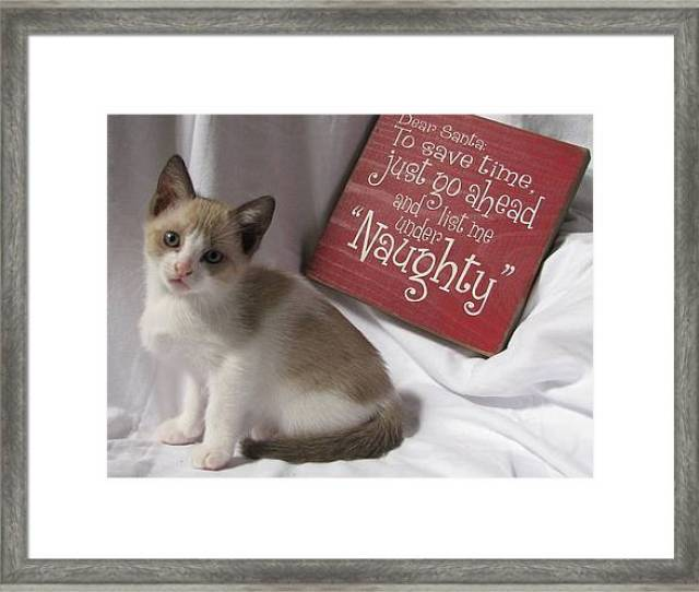 Christmas Framed Print Featuring The Photograph Funny Christmas Kitten Naughty Two By Pamela Benham