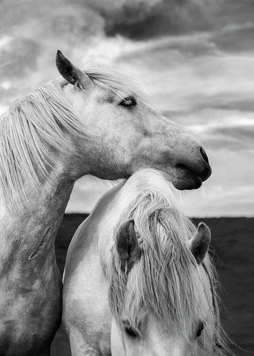 Black And White Horses For Sale : black, white, horses, Scottish, Horses, Greeting, Diane39