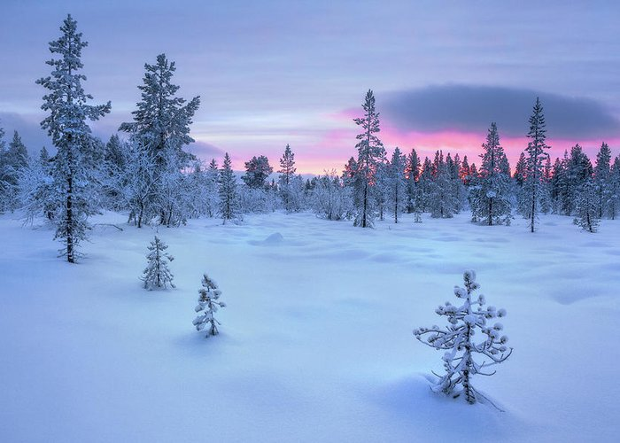 All of the clear cutting is taking away homes of all the animals in the forest. Taiga Forest Arctic Finland Greeting Card For Sale By Simon J Byrne