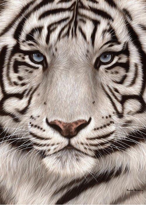 White Tiger For Sale : white, tiger, White, Tiger, Painting, Greeting, Rachel, Stribbling