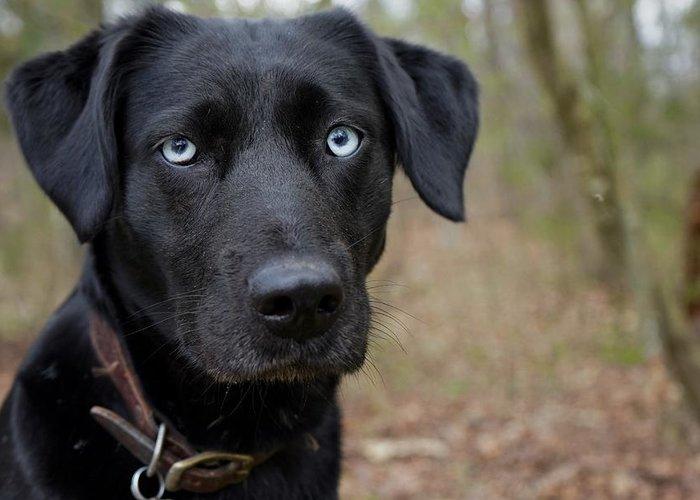 black dog with blue