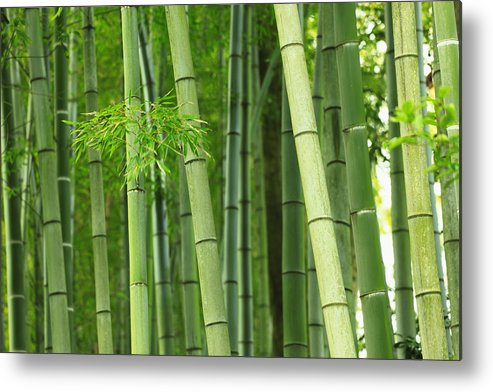 green bamboo trees metal