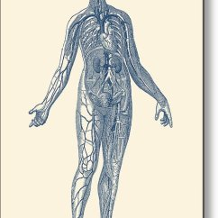 Human Vascular Anatomy Diagram Labeled Of Octopus System Vintage Metal Print By Veins Featuring The Drawing Prints
