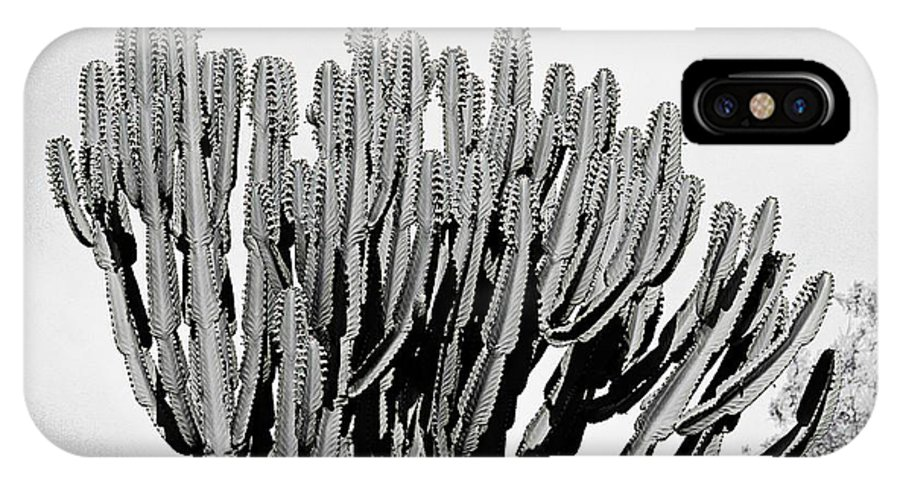 cactus in black and