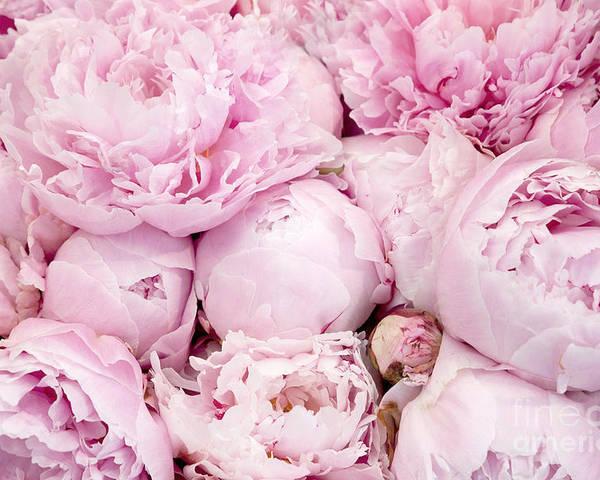 pastel pink peony flowers