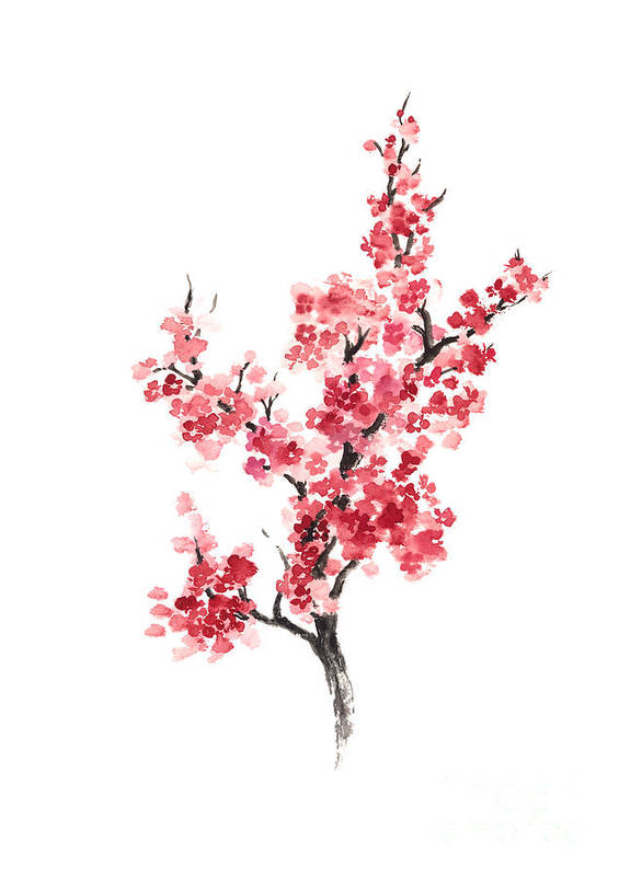 cherry blossom japanese flowers poster poster