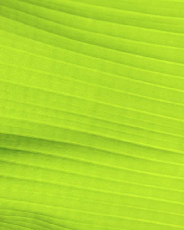 bright green banana leaf