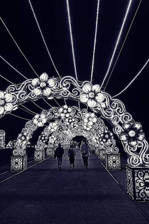 Dragon Lights Festival flower tunnel