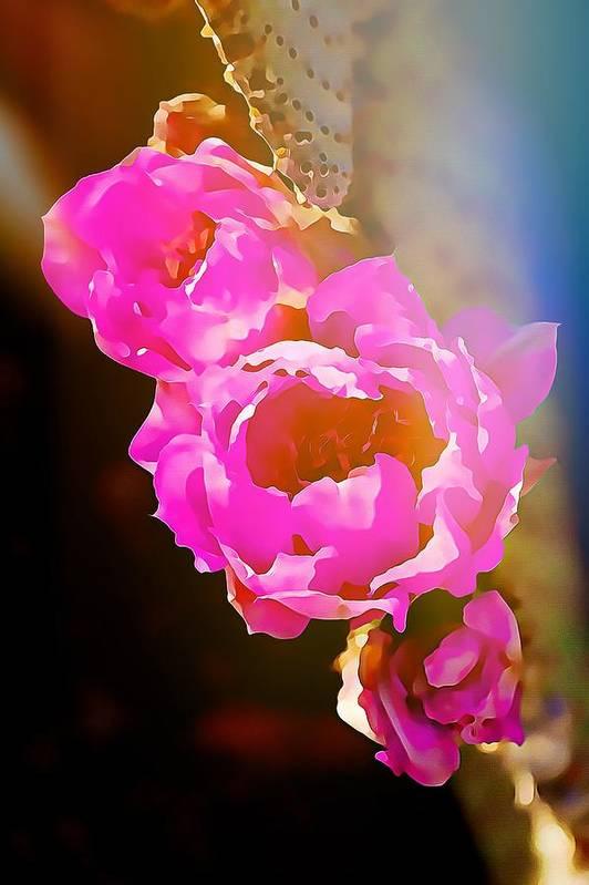 Digital art Pink Cactus Flowers - Digital Art by Tatiana Travelways