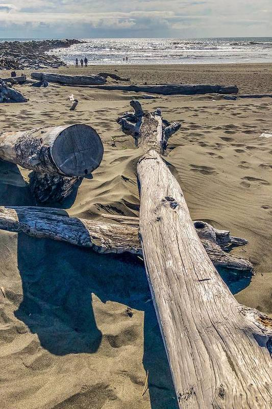 Beach Art Print featuring the photograph Drift Wood On The Beach by Tatiana Travelways